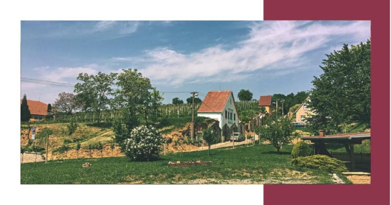 Putování za mladým vínem v Bořeticích